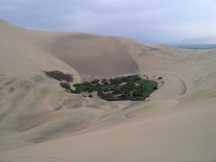 Oasis in the Atacama desert near Huacachina in Peru Arid Climate Atacama Desert Beauty In Nature Day Desert Desert Oasis Huacachina Huacachina, Peru Landscape Nature No People Oasis Outdoors Peru Sand Sand Dune Scenics Sky Tree Fresh On Eyeem