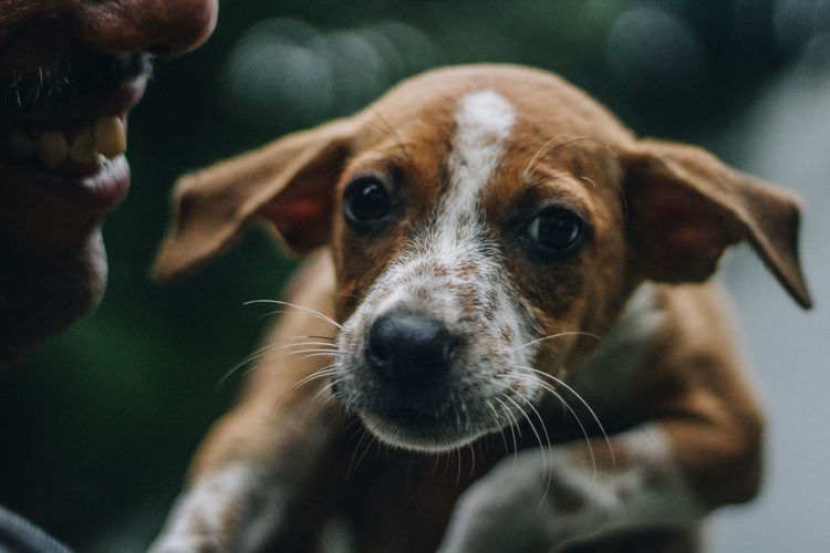 Close-up portrait of dog holding by man outdoors