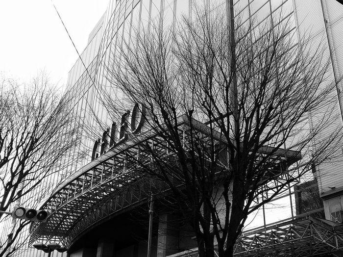 Mall Celeo Kokubunji Tokyo Architecture Trees Spring Tokyospring2016 Japan Travelphotography