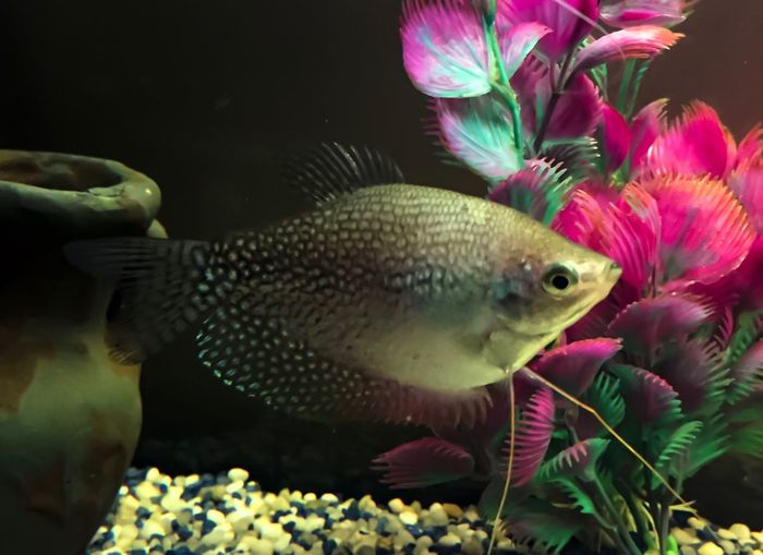 Animals In The Wild Underwater Aquarium Animal Themes Fish One Animal Swimming Animals In The Wild Nature Water Photographer Photooftheday Nature_perfection Nature Photography Nature_collection Large Group Of Animals Animals Acquariofilia Colorful Colors Beauty In Nature