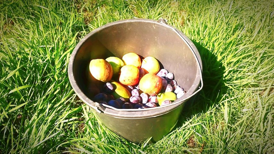 Apfel Apple Apples Pflaumen Obst Fruit Fruits Fruitporn Plum Plums Eimer Bucket No People Freshness Grass