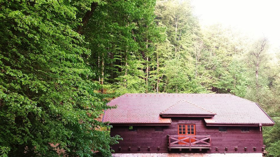 Cottage Eco Czech Republic EyeEmNewHere EyeEm Nature Lover Nature Tree Architecture Building Exterior Built Structure Green Color Sky The Architect - 2018 EyeEm Awards