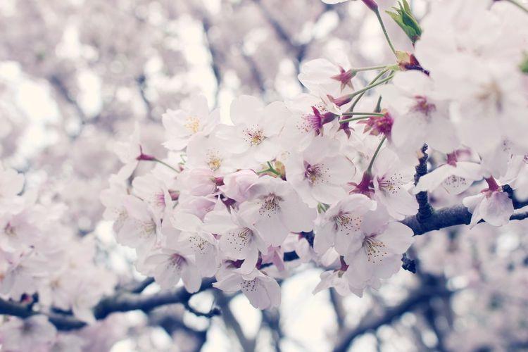 Sakura Hanging Out Taking Photos Hello World Relaxing Traveling