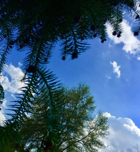 Beautiful sky Tree Low Angle View Growth Nature Sky Tranquility Beauty In Nature Branch No People Day Outdoors