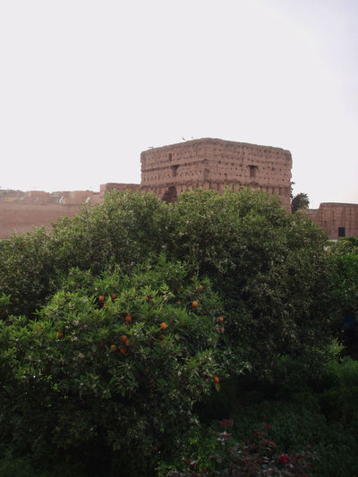Africa Architecture Cloudy Culture History Landscape Marrakech Marrakesh Morocco Old Old Ruin Orange Tree Oranges Overcast Palace Ruins Shrubs Sky Trees