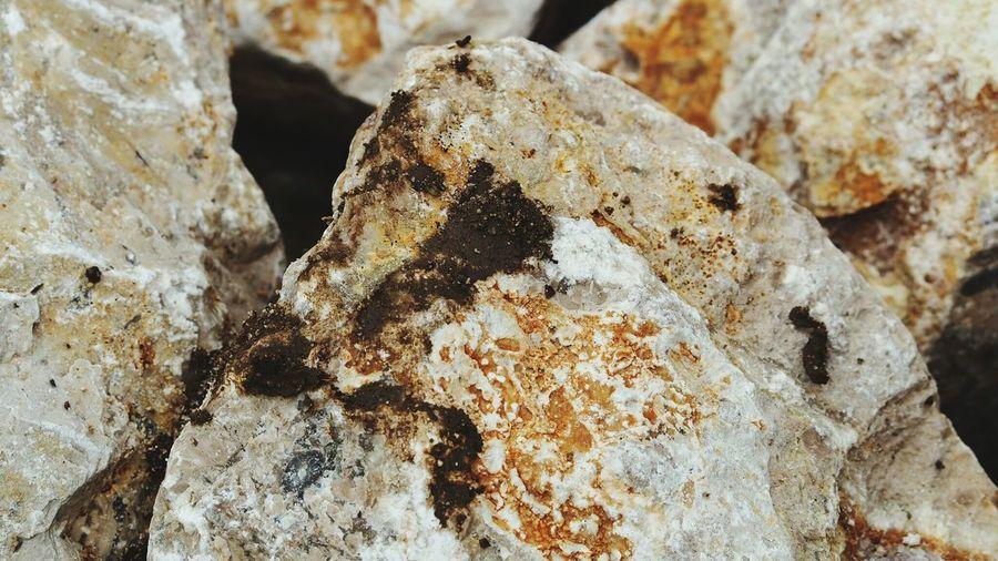 Fungus Textured