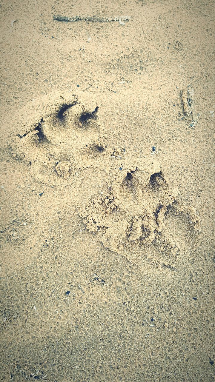 footprint, paw print, sand, animal track, high angle view, beach, day, no people, outdoors, track - imprint, nature, animal themes, close-up