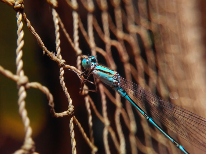 Damselfly Macro Insect Fishing Net Outdoors Day No People Close-up Mobilephotography