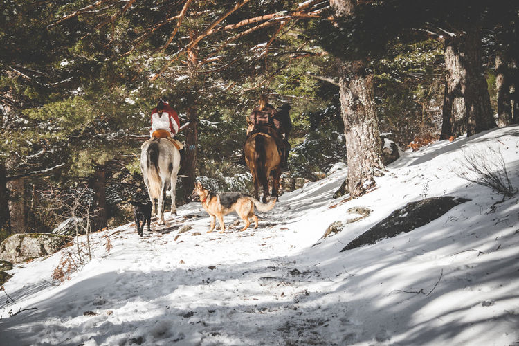 Famility riding horses in winter. Snow. Adventure Time Animal Themes Beauty In Nature Cold Temperature Dog Domestic Animals Nature Old Times Outdoors Pets Snow Winter