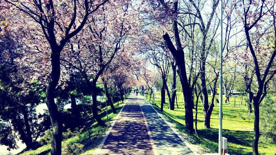 Spring Into Spring Relaxing Enjoying Life