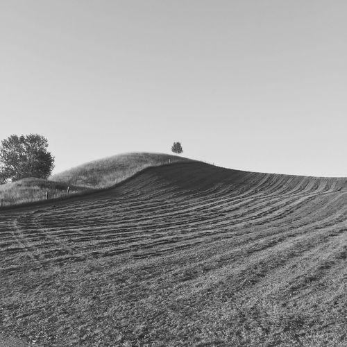 Alone Beauty In Nature Bw Fields Grass Hill Knoll Lone Tree Nature Shadow Switzerland