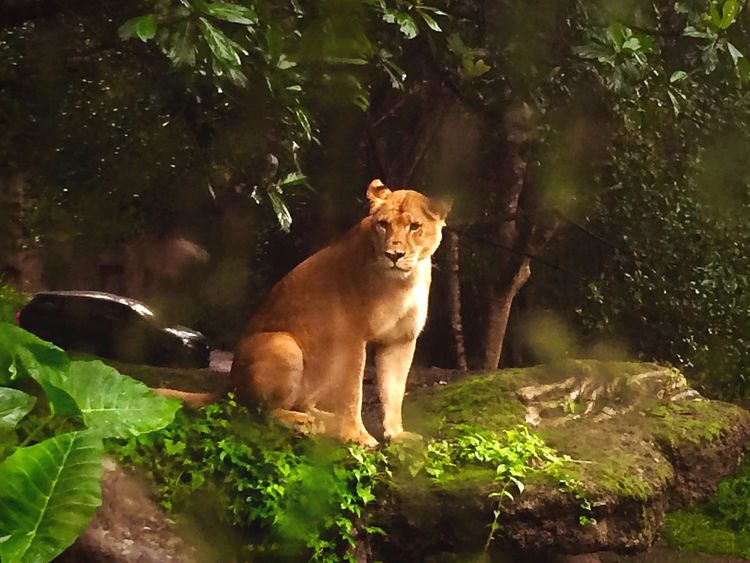 a female.. One Animal Animal Themes Mammal Full Length Animals In The Wild Wildlife Zoology Plant Animal Looking At Camera Outdoors Day Cat Family Nature Green Color No People Domestic Animals Loyalty Female After Rain