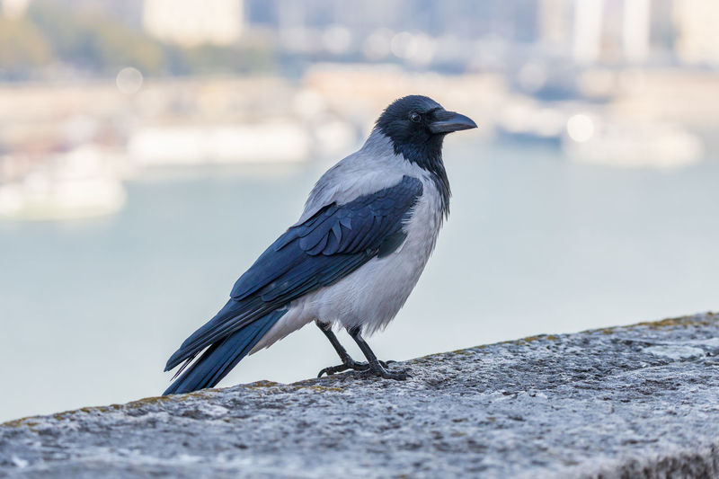 Close-up of bird perching on rock against wall
