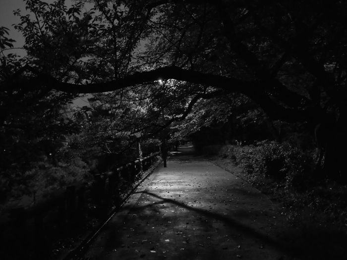 Back Streets Black And White Cold From Darkness To Dream Humidity Inside Japan Light And Shade Lines Nature Night No People Outdoors Princess Reflections Rêverie Shadow Silence Solitude Tokyo Tranquility Transformation Under The Sensual Searchlight Fuck Me Whoever You Are