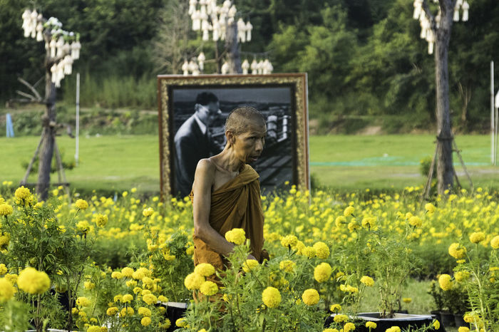 A monk inspecting his field of flowers, framed by an image of the King of Thailand. ASIA Peace Thailand Beauty In Nature Buddhism Day Express Field Flower Growth Human Representation King - Royal Person Monk  Nature No People Orange Robes Outdoors Plant Sculpture Statue Tree Yellow Zen
