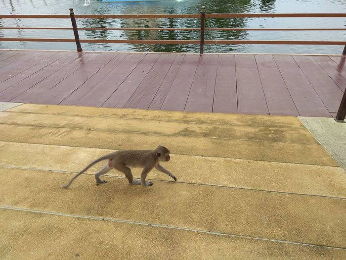 High angle view of dog on water