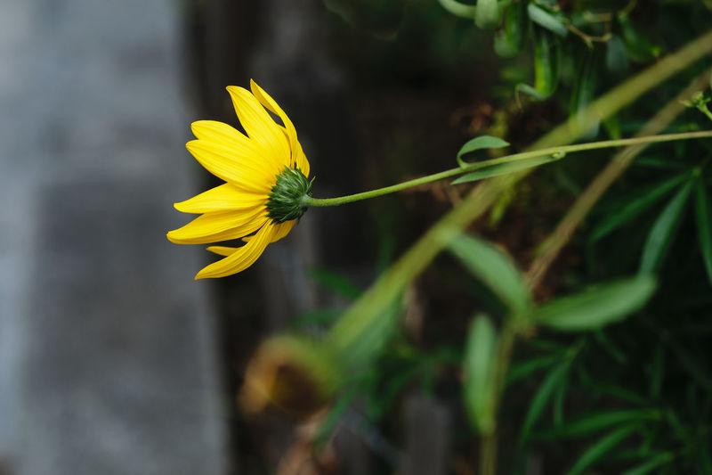 A moment. Plant