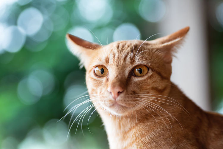 Close-up portrait of ginger cat