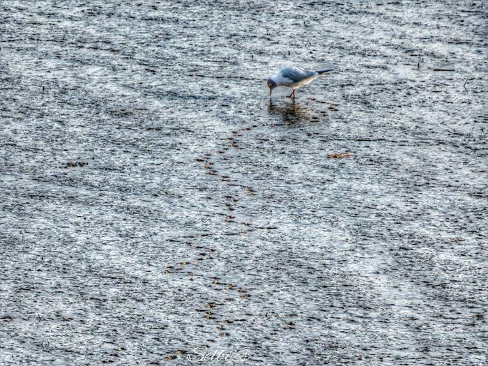 Taking Photos Riverside Birdwatching Hdr Edit Springtime
