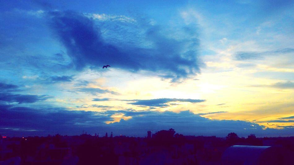 Sunset ❤🌎 Blue Sky Beautiful Birds Beauty In Nature