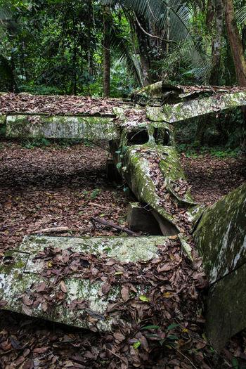 Cockscomb Basin, Belize Plane Abandoned Close-up Crashed Plane Day Jungle Leaf Moss Nature No People Outdoors