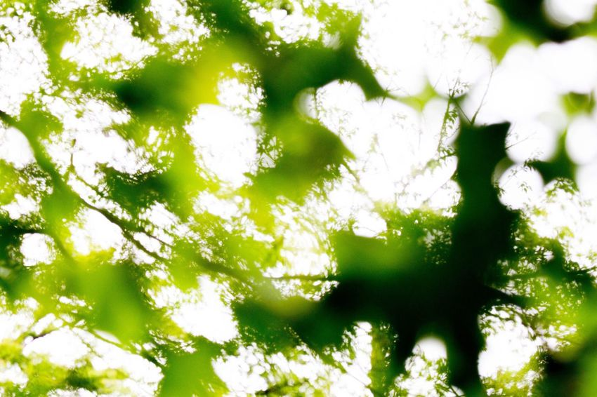 Green Color Nature Growth No People Leaf Tree Day Outdoors Beauty In Nature Backgrounds Plant Freshness Branch Close-up Canon Photography Eos7d OpenEdit Saitama EyeEm Best Shots
