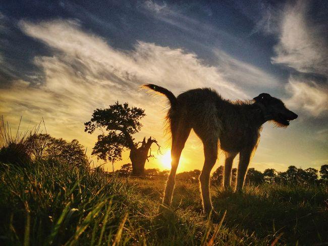 Live For The Story Enjoying The Sun LEO... The One Eyed Lurcher... Bushy Park I Love My Dog
