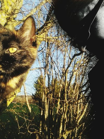 Me and my cat Nature Cat Katzenliebe Cateye My Eyes Tho Outdoors Portrait Low Angle View Cat Lovers