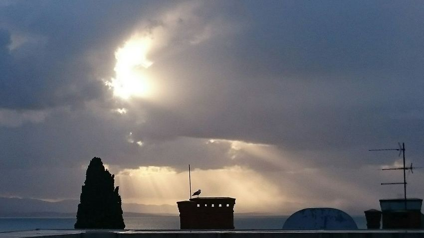 Pigeon Sky Nature Outdoors Cloudy Sea Sunlight Sun Sunline