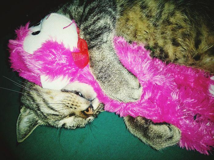 kitty loves pink monkey Cats Of EyeEm Kitty Cat Pink Stuffed Toy Cuddles Hug Cute Sleeping Close-up Sleepy Pets Domestic Cat Tabby Feline Tabby Cat Pet Bed