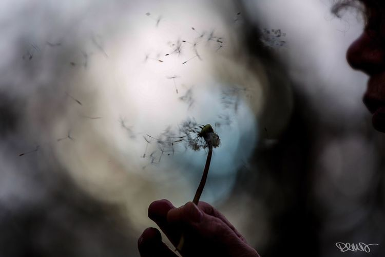 Make A Wish Dandelion Dandelion Collection Focus On Foreground Holding One Person Human Hand Women Close-up Real People Fragility EyeEm Team thank you @melodiously