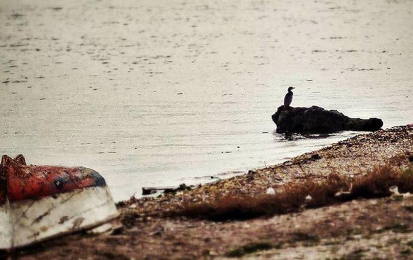 Zirveler ve en diptekiler hep mi yalnız olmak zorunda? Hepimizin kaderi bu mu? Sea Boat LG  G4 Mobilephotography Seaside Gulf Moment O_an