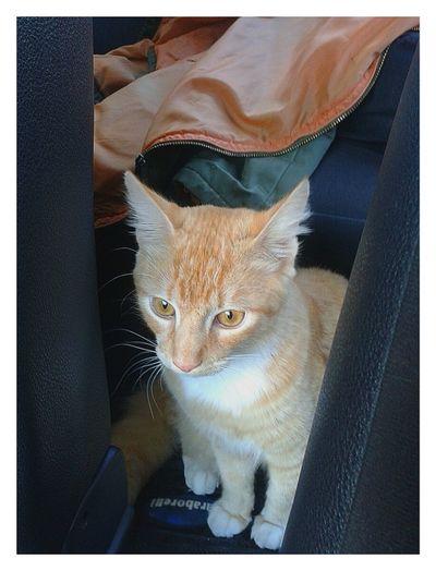 otto love Cat Drivingshots Vet  Helloworld