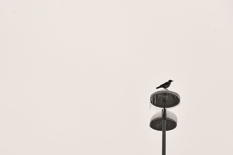 Low angle view of bird perching on street light against clear sky