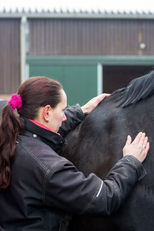 Black Horse Backache Equine Horse Not Happy Osteopathy Osteopathy Therapy Physical Equine Sick Horse