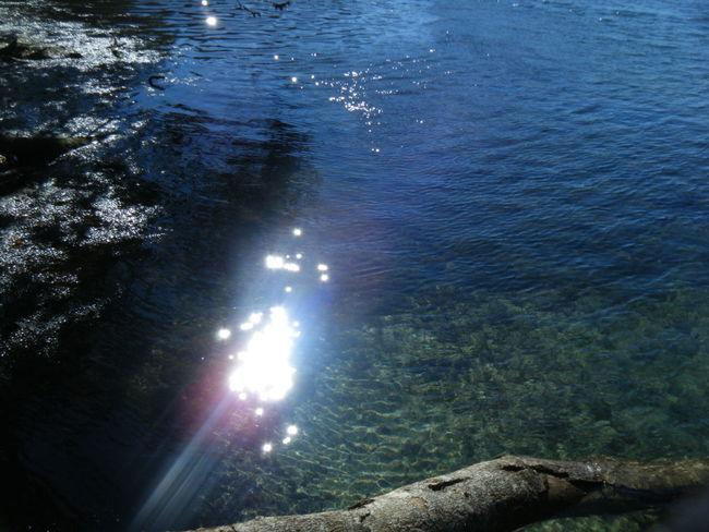 Tree Branch Water Sun Glisten Glistening Shining Blue River