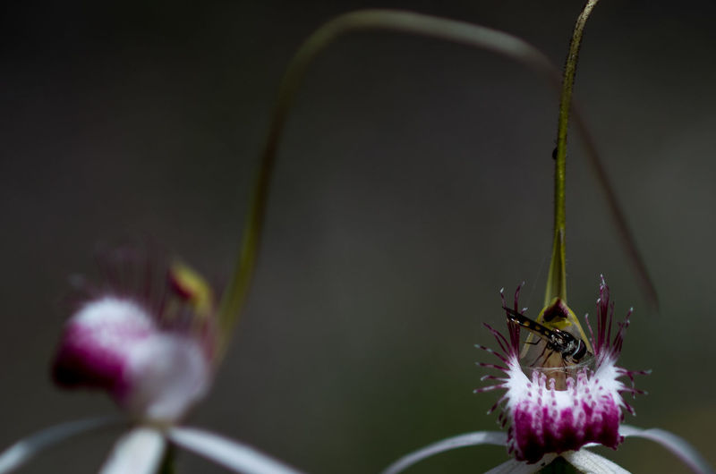 Animal Themes Animals In The Wild Beauty In Nature Close-up Day Flower Flower Head Fragility Freshness Horizontal Insect Nature No People Orchid Outdoors Plant Pollinator
