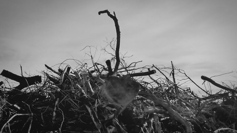 Outdoor Photography Wood Blackandwhite Pile Of Wood standing Tall From My Point Of View Capture The Moment Check This Out Dead Trees For The Love Of Trees ~ Fallen Trees Black And White Collection  Darkart Stand Out From The Crowd top of the Pile Up