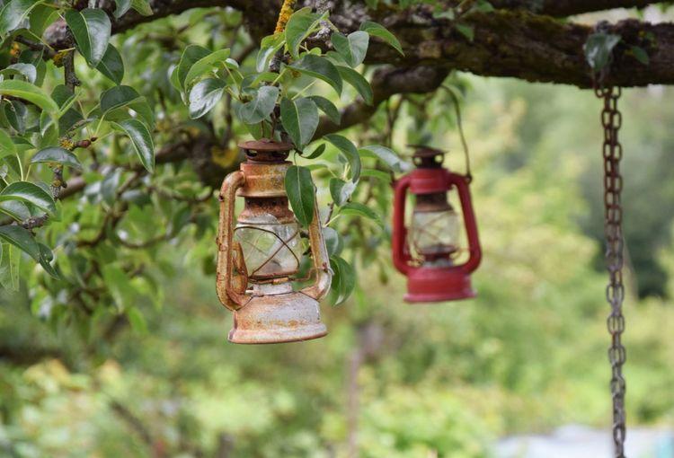 Close-up of lanterns on tree