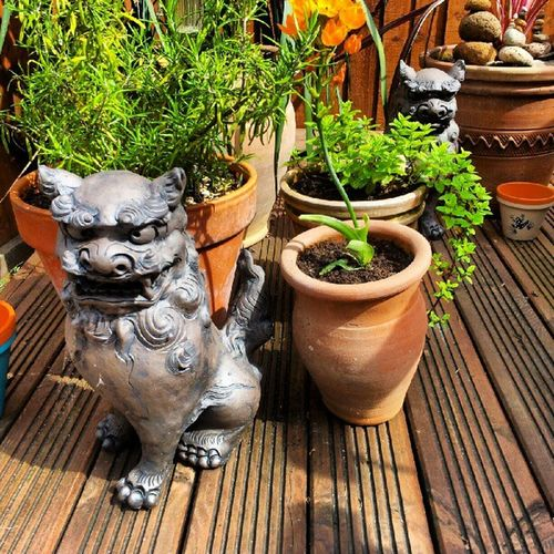 Chisa Lion from Okinawa Japanese  chiisa one with am open mouth to make the bad spirits go away and one to keep the good spirits in ...