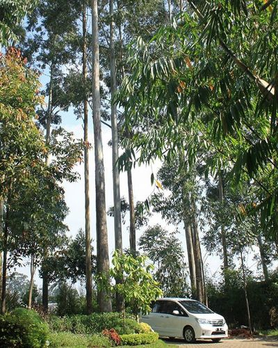 Canond500 Canon500d Cars Nature Trees Instalike Instagram Myview Nofilter Green