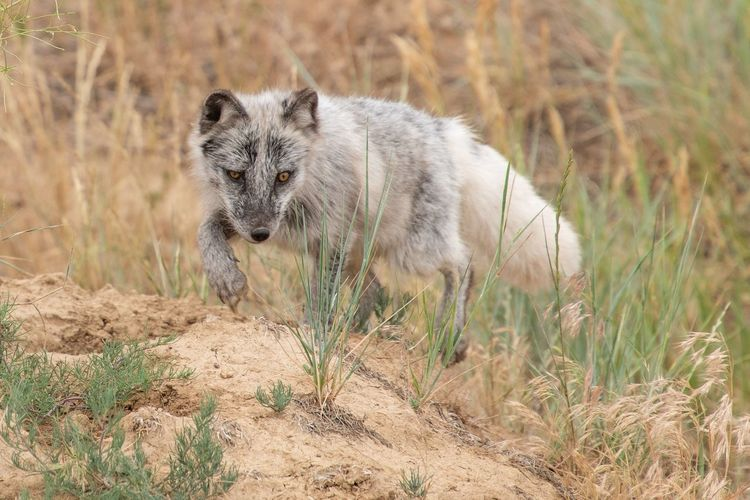 Fox Animal Themes Animal One Animal Animal Wildlife Mammal Vertebrate Nature Outdoors No People