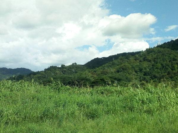 Tea Crop Tree Mountain Forest Agriculture Rural Scene Sky Grass Landscape Green Color