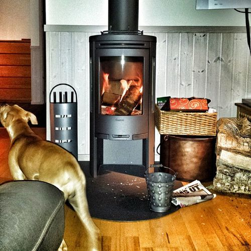 Ibland är det sådär lite extra gött att leva :) Eld Spis Fire Pitlove pitbyllinstagram pupy pit instapit instadog pitty dontbullymypitbull dog doglove pitlove pitbyllinstagram pupy pit sverige sweden höst autumn internationalpictures höstkväll