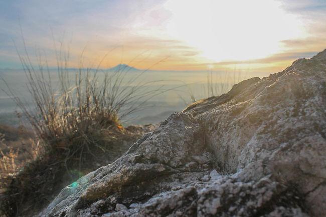 Beauty In Nature Cloud Idyllic Nature Plant Sky Sun Sunset