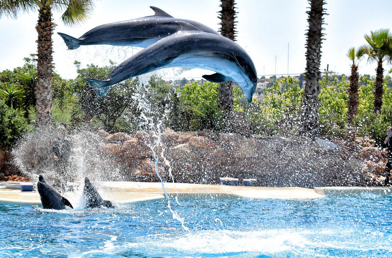 Dolphins Water