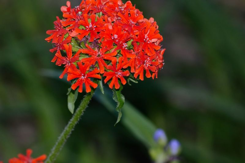 Flower Nature Beauty In Nature Plant Day Outdoors No People Fragility Close-up Flower Head Backyard Photography Blooming Springtime Growth Red Multi Colored Green Color Leaf Blue Scenics