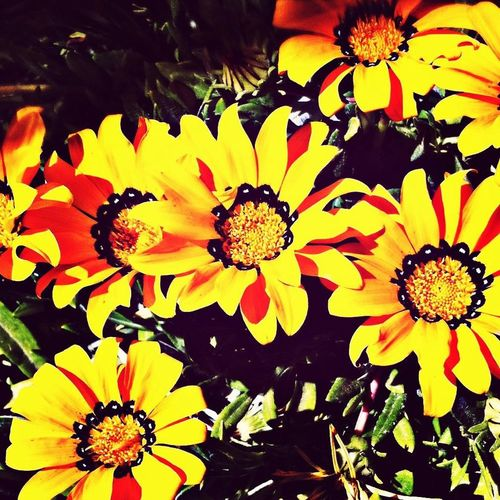 Flowers! ♥️~♥️