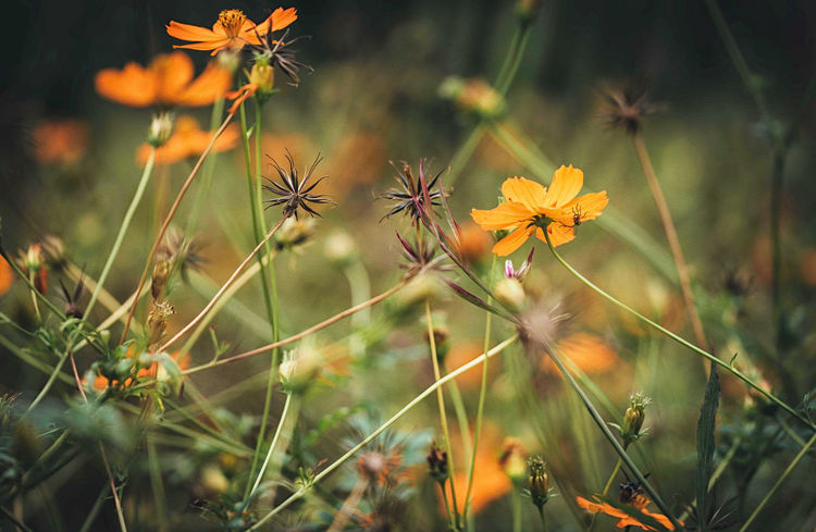 Field of Flowers Flowers,Plants & Garden Soft Light Beauty In Nature Botanical Garden Colorful Digital Art Oil Painting Orange Color Photo Editing Photographyisthemuse Spring Flowers
