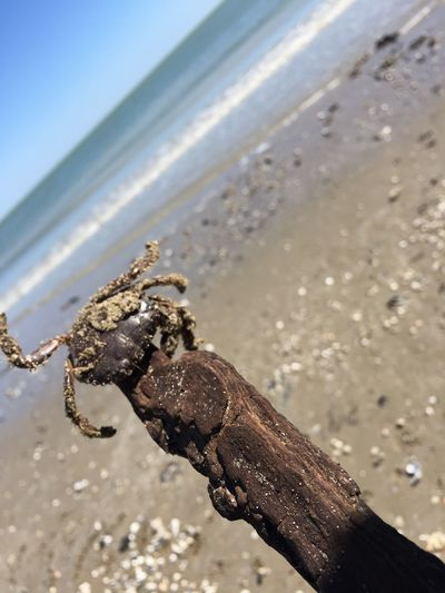 Nature Pic Beauty In Nature Tranquility Trip Blue Sky Animals Crab Crab On The Beach